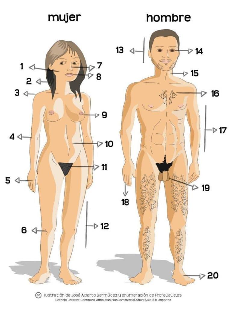 Vocabulario del cuerpo humano en español | ProfeDeELE